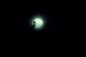 Stork at the full moon