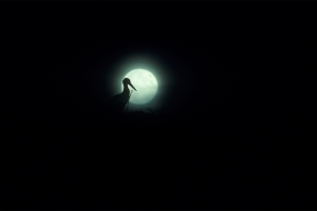 Stork at the full moon