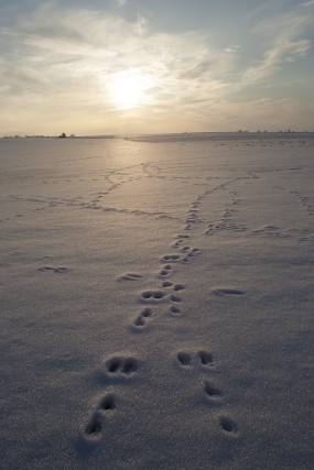 Hare paths