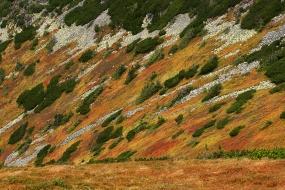 Tundra of the Tatras
