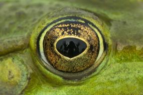 Autoportret w oku żaby