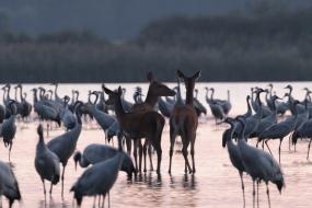 Lost among cranes