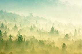 Bieszczadzkie mgły