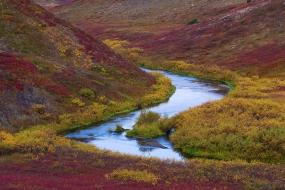 Tundra in autumn