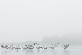 Misty daybreak