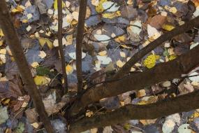 Skrytka na dnie lasu