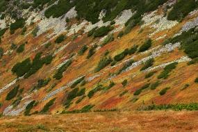 Tatrzańska tundra