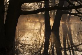 Poranek w lesie łęgowym