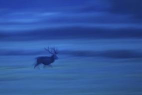 Deer's trot