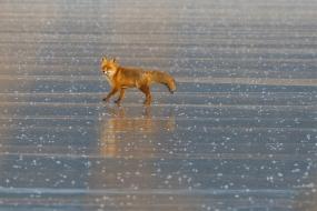 Spacer po lodzie