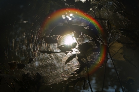 Rainbow in a spider-web
