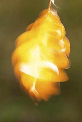 Wirujący liść