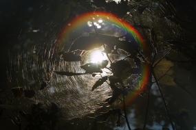 Tęcza w pajęczynie
