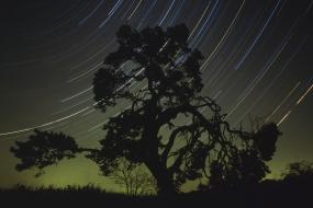 Sosna i tory gwiazd