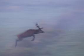 Deer's leap
